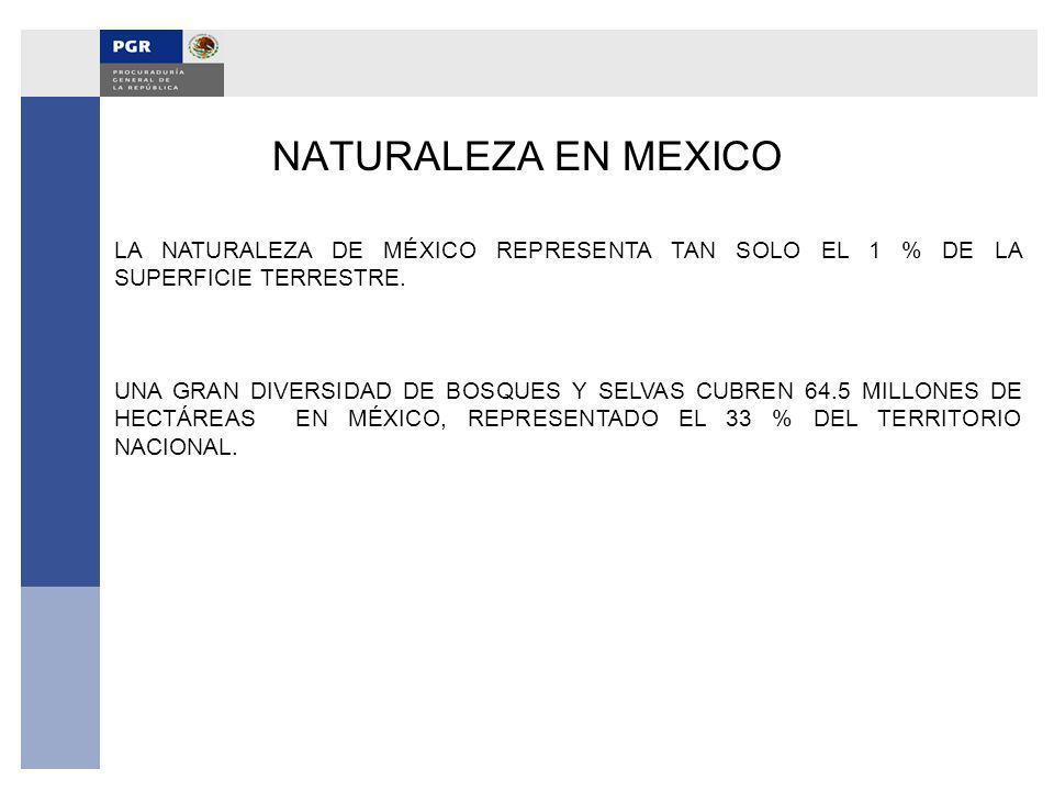 NATURALEZA EN MEXICO LA NATURALEZA DE MÉXICO REPRESENTA TAN SOLO EL 1 % DE LA SUPERFICIE TERRESTRE. UNA GRAN DIVERSIDAD DE BOSQUES Y SELVAS CUBREN 64.