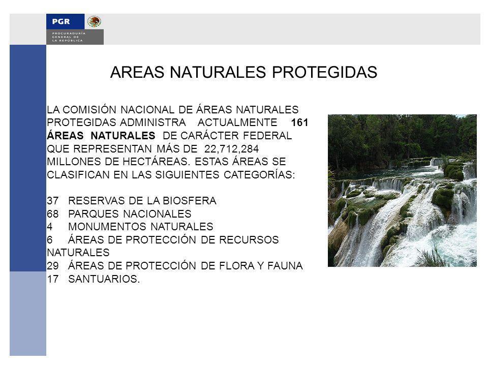 AREAS NATURALES PROTEGIDAS LA COMISIÓN NACIONAL DE ÁREAS NATURALES PROTEGIDAS ADMINISTRA ACTUALMENTE 161 ÁREAS NATURALES DE CARÁCTER FEDERAL QUE REPRE