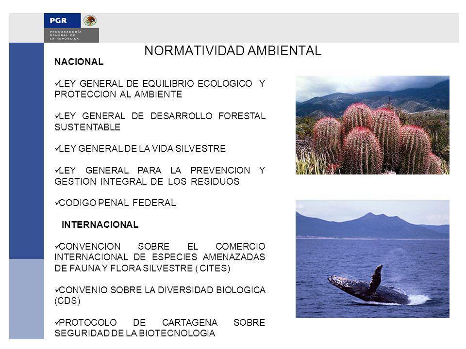 NORMATIVIDAD AMBIENTAL NACIONAL LEY GENERAL DE EQUILIBRIO ECOLOGICO Y PROTECCION AL AMBIENTE LEY GENERAL DE DESARROLLO FORESTAL SUSTENTABLE LEY GENERA