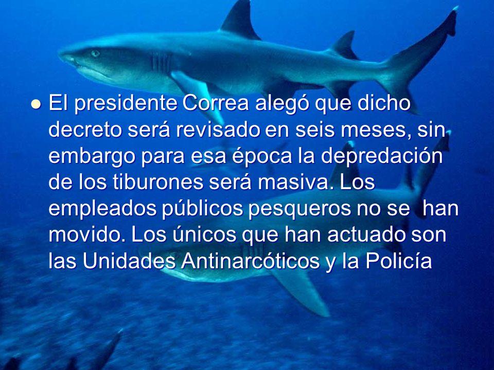 El presidente Correa alegó que dicho decreto será revisado en seis meses, sin embargo para esa época la depredación de los tiburones será masiva. Los