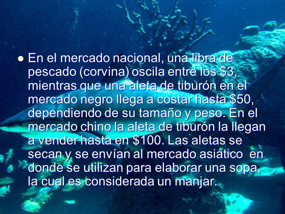 En el mercado nacional, una libra de pescado (corvina) oscila entre los $3, mientras que una aleta de tiburón en el mercado negro llega a costar hasta