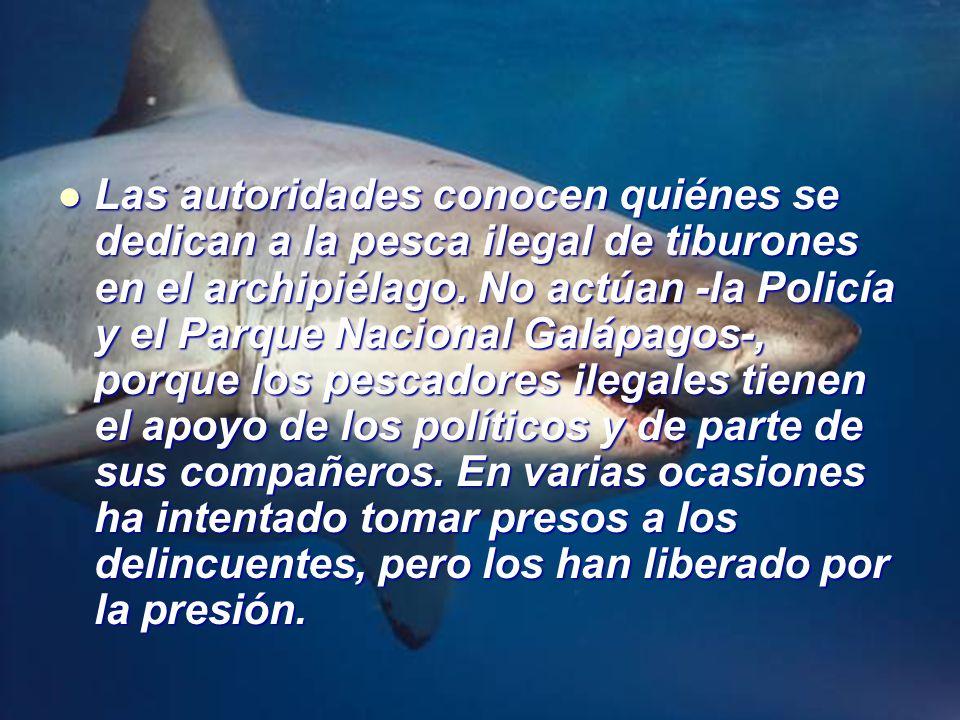 Las autoridades conocen quiénes se dedican a la pesca ilegal de tiburones en el archipiélago. No actúan -la Policía y el Parque Nacional Galápagos-, p