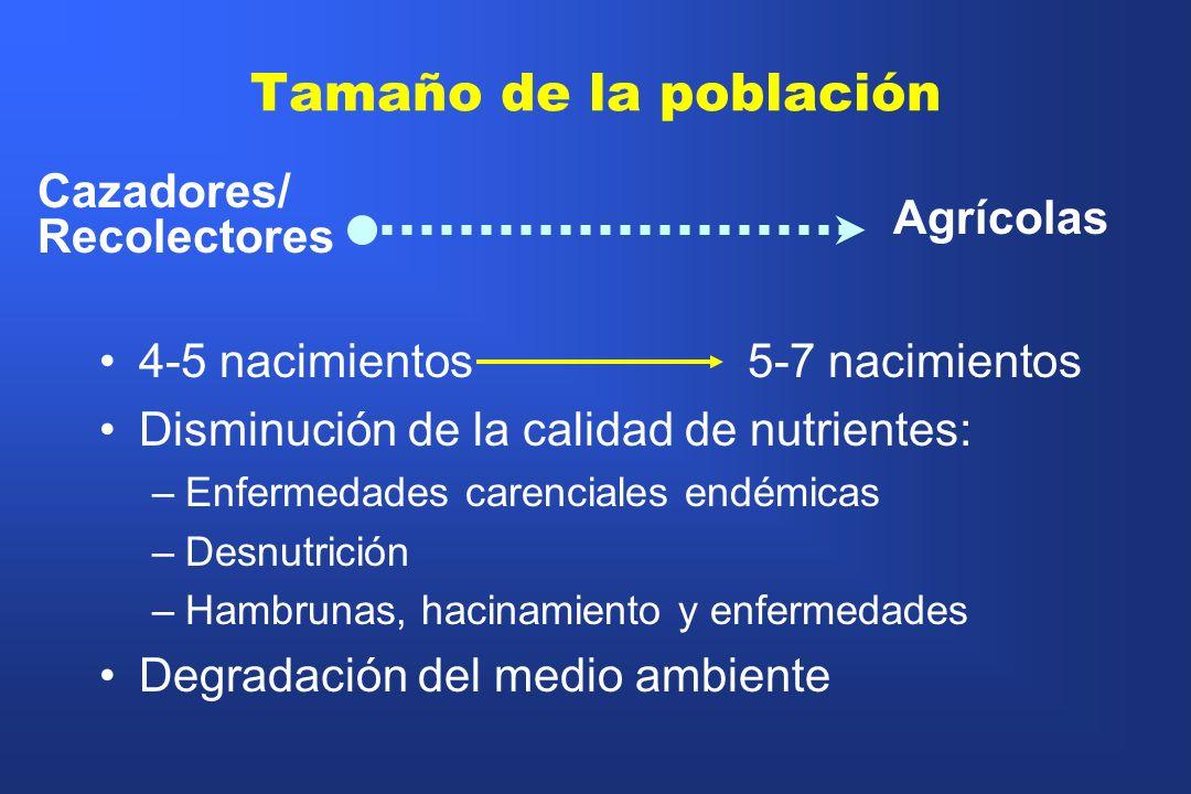 Tamaño de la población Cazadores/ Recolectores Agrícolas 4-5 nacimientos 5-7 nacimientos Disminución de la calidad de nutrientes: –Enfermedades carenc