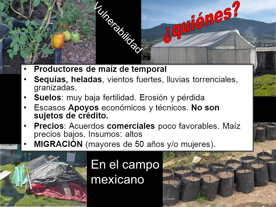 Productores de maíz de temporal Sequías, heladas, vientos fuertes, lluvias torrenciales, granizadas. Suelos: muy baja fertilidad. Erosión y pérdida Es