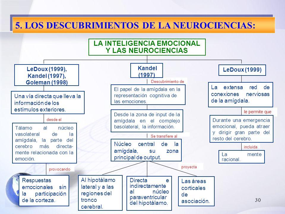 30 proyecta LA INTELIGENCIA EMOCIONAL Y LAS NEUROCIENCIAS Una vía directa que lleva la información de los estímulos exteriores. Tálamo al núcleo vasol