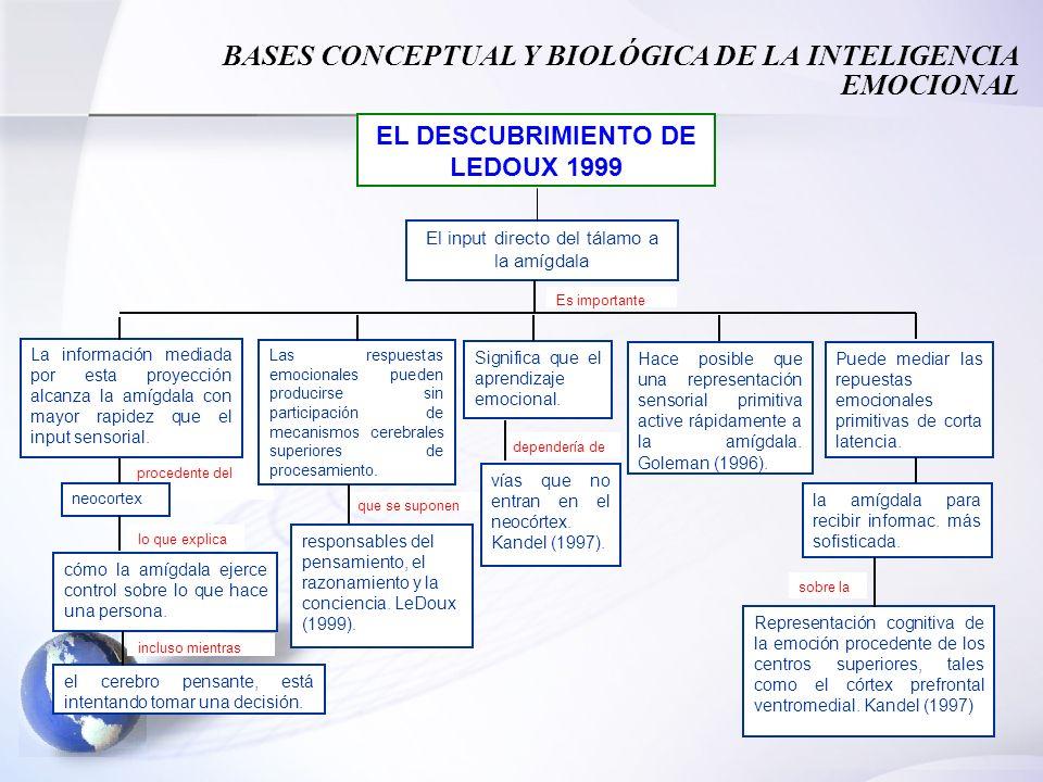 31 procedente del El input directo del tálamo a la amígdala lo que explica EL DESCUBRIMIENTO DE LEDOUX 1999 La información mediada por esta proyección