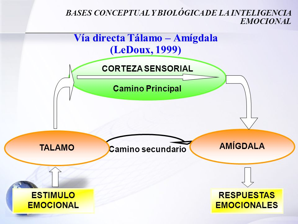 32 Vía directa Tálamo – Amígdala (LeDoux, 1999) Camino secundario CORTEZA SENSORIAL Camino Principal TALAMO AMÍGDALA ESTIMULO EMOCIONAL RESPUESTAS EMO