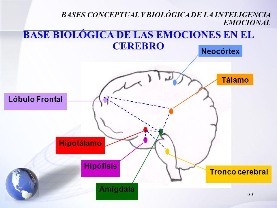 33 BASE BIOLÓGICA DE LAS EMOCIONES EN EL CEREBRO Amígdala Tálamo Lóbulo Frontal Hipófisis Neocórtex Hipotálamo Tronco cerebral BASES CONCEPTUAL Y BIOL