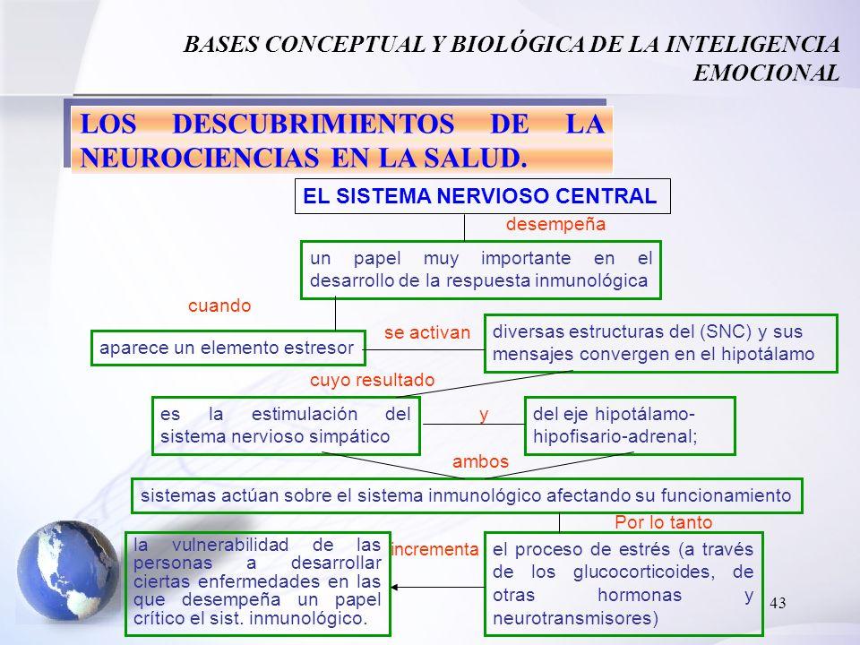 43 BASES CONCEPTUAL Y BIOLÓGICA DE LA INTELIGENCIA EMOCIONAL LOS DESCUBRIMIENTOS DE LA NEUROCIENCIAS EN LA SALUD. EL SISTEMA NERVIOSO CENTRAL desempeñ