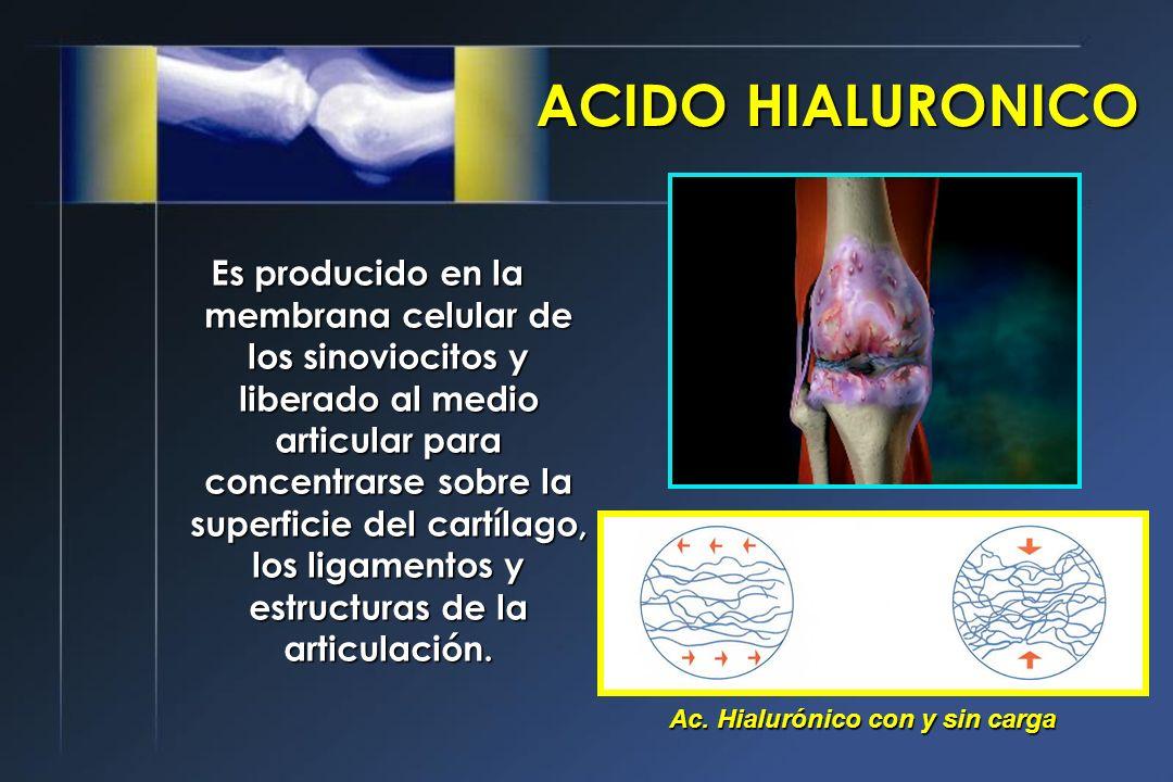 Es producido en la membrana celular de los sinoviocitos y liberado al medio articular para concentrarse sobre la superficie del cartílago, los ligamentos y estructuras de la articulación.