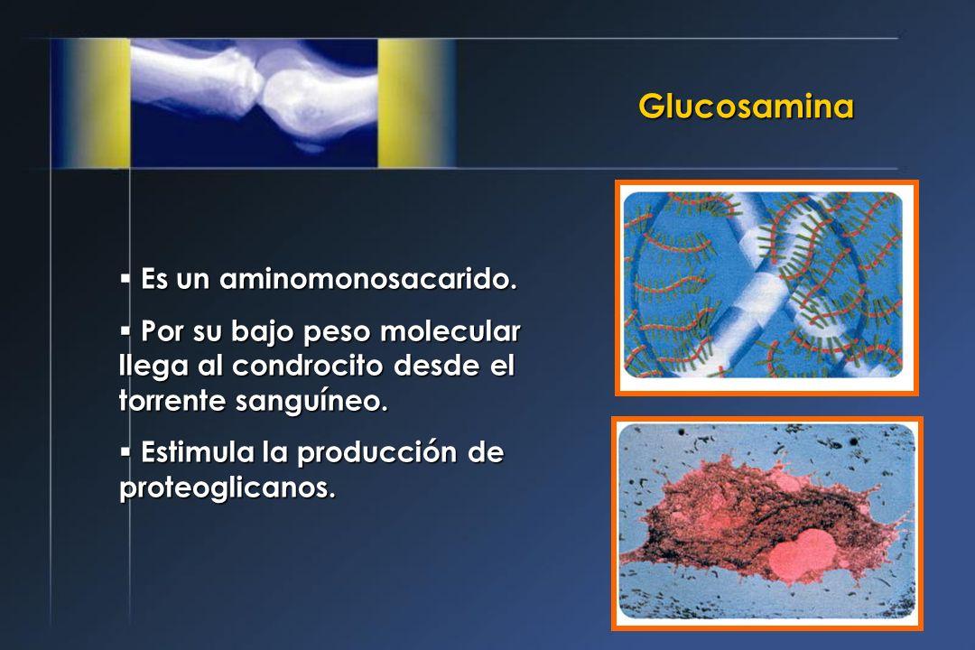 Glucosamina Es un aminomonosacarido. Por su bajo peso molecular llega al condrocito desde el torrente sanguíneo. Por su bajo peso molecular llega al c