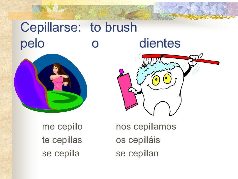 Cepillarse: to brush pelo o dientes me cepillo nos cepillamos te cepillas os cepilláis se cepilla se cepillan