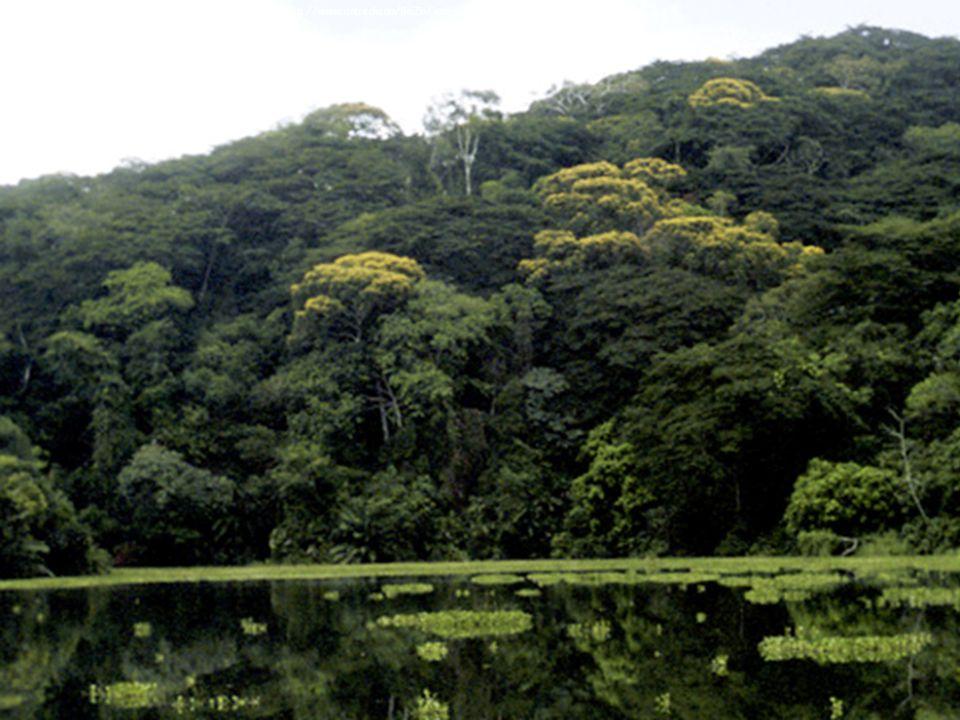Image Courtesy of: http://www.anu.edu.au/BoZo/jennions/images/Panama%20lake.jpg