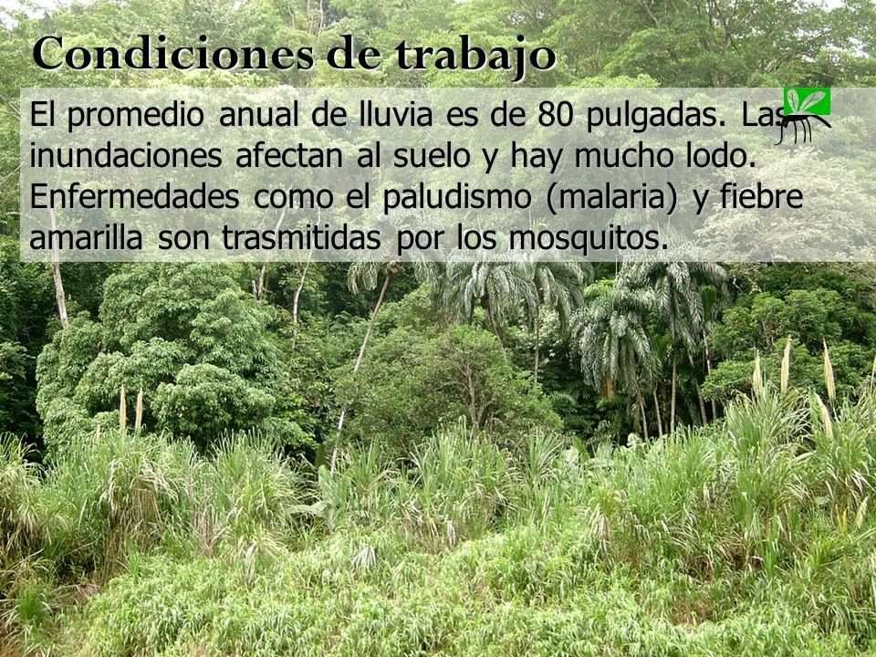 El promedio anual de lluvia es de 80 pulgadas. Las inundaciones afectan al suelo y hay mucho lodo. Enfermedades como el paludismo (malaria) y fiebre a