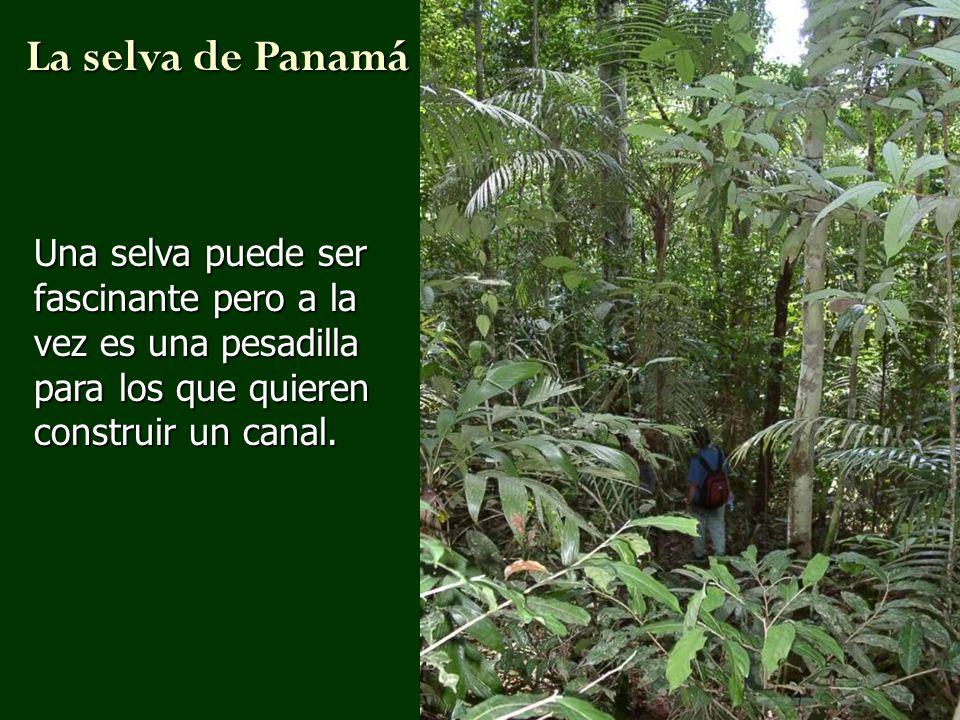 Una selva puede ser fascinante pero a la vez es una pesadilla para los que quieren construir un canal. La selva de Panamá