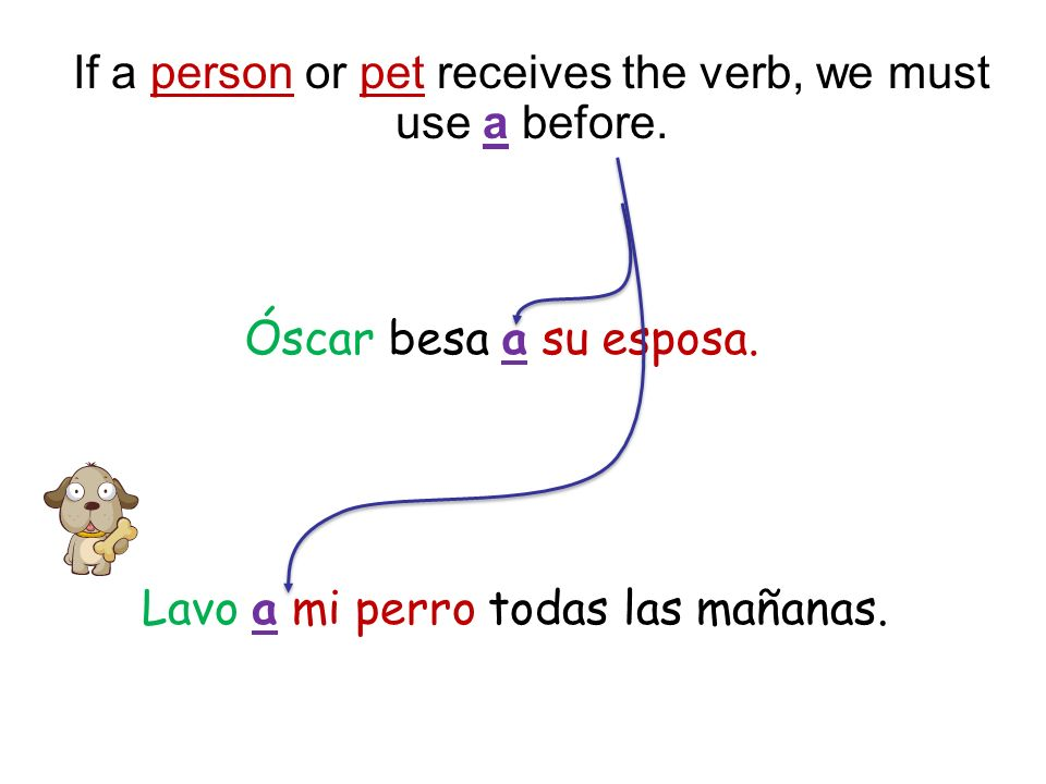 If a person or pet receives the verb, we must use a before. Óscar besa a su esposa. Lavo a mi perro todas las mañanas.