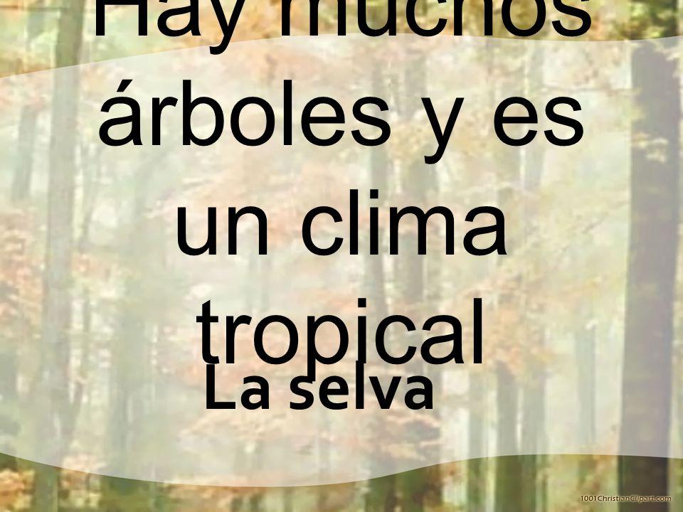 Hay muchos árboles y es un clima tropical La selva