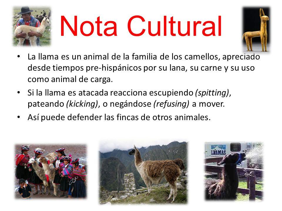 Nota Cultural La llama es un animal de la familia de los camellos, apreciado desde tiempos pre-hispánicos por su lana, su carne y su uso como animal d