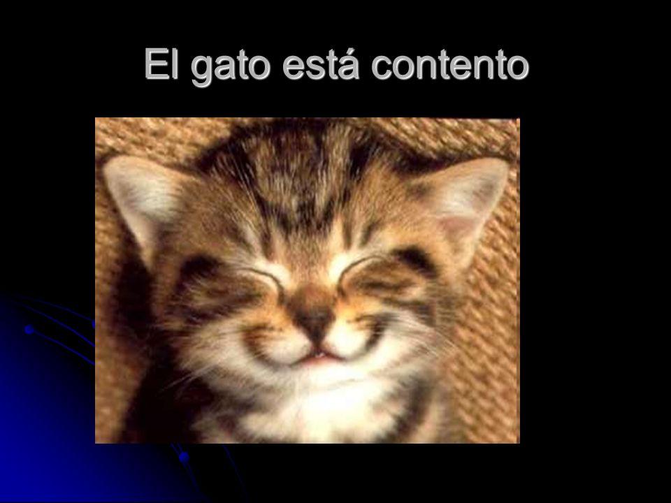 El gato está contento