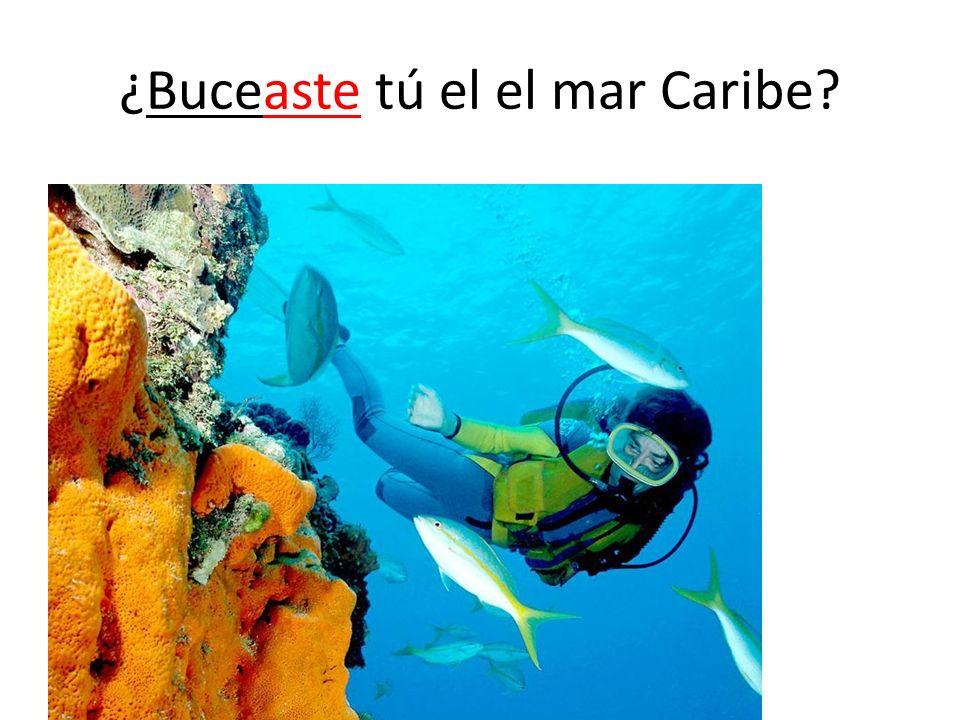 ¿Buceaste tú el el mar Caribe?