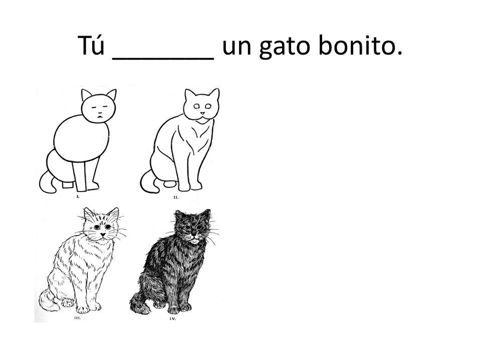 Tú _______ un gato bonito.