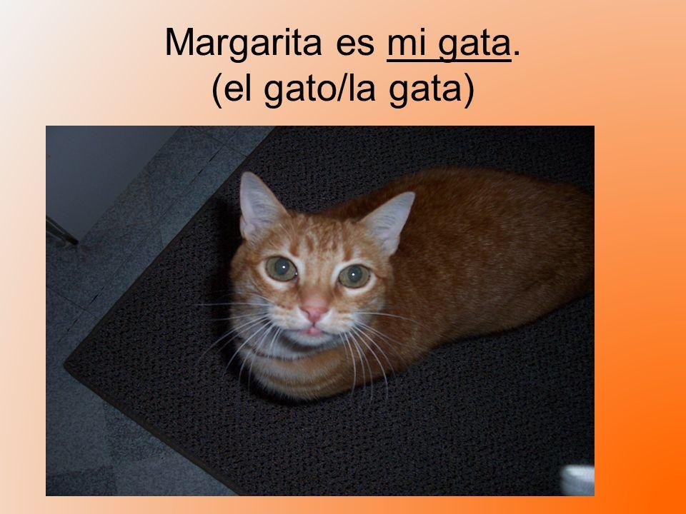 Margarita es mi gata. (el gato/la gata)