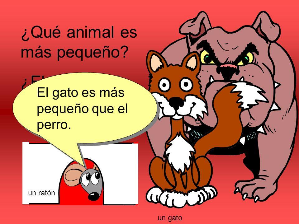¿Qué animal es más pequeño. ¿El perro o el gato. El gato es más pequeño que el perro.