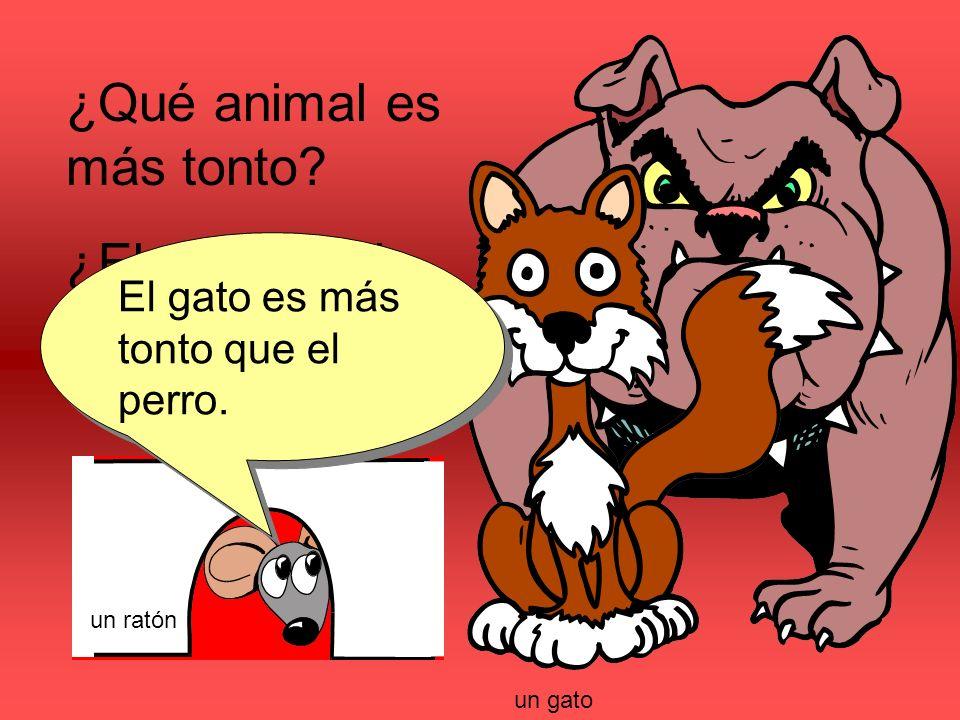 ¿Qué animal es más tonto? ¿El perro o el gato? El gato es más tonto que el perro. un gato un ratón