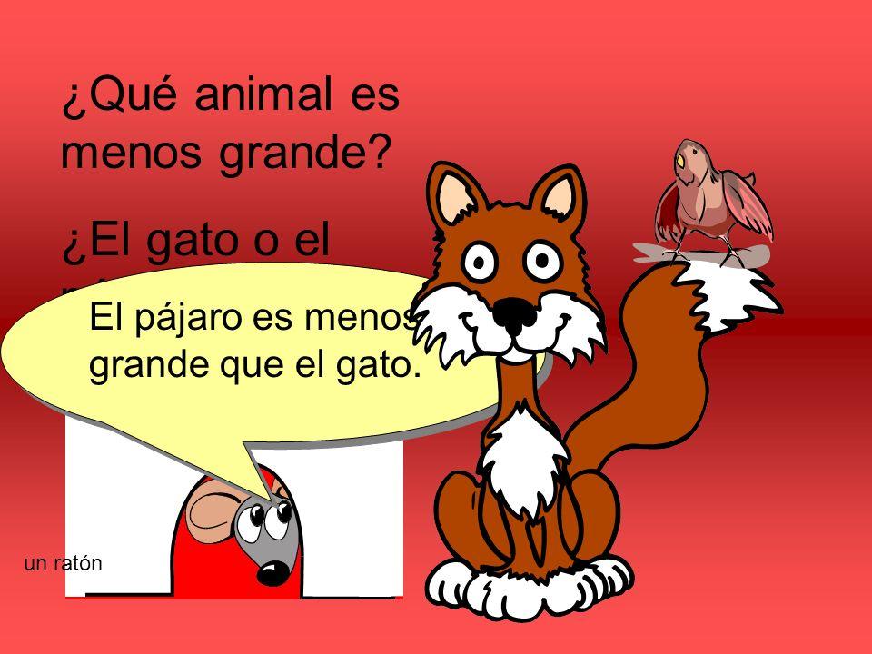 ¿Qué animal es menos grande? ¿El gato o el pájaro? El pájaro es menos grande que el gato. un ratón