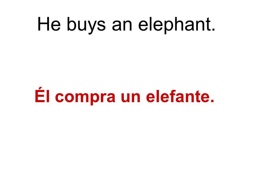 He buys an elephant. Él compra un elefante.