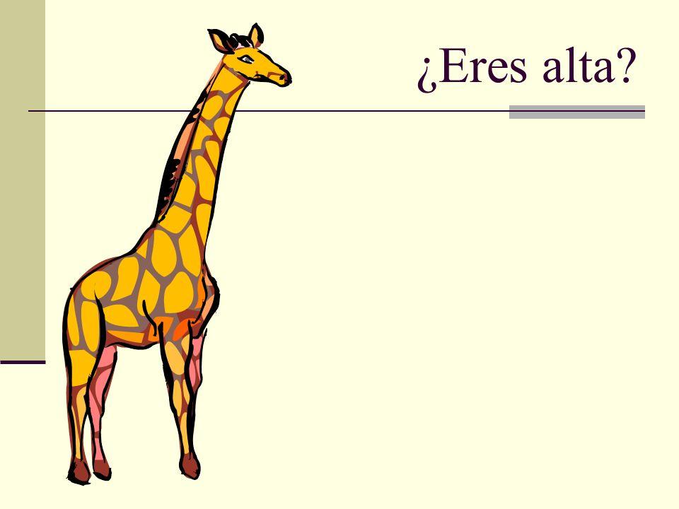 ¿Eres alta?