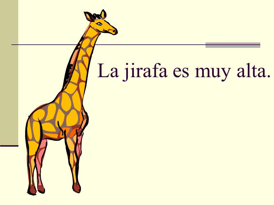 La jirafa es muy alta.