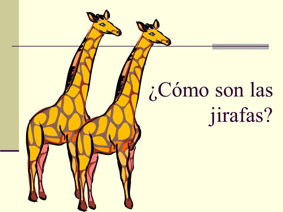 ¿Cómo son las jirafas?