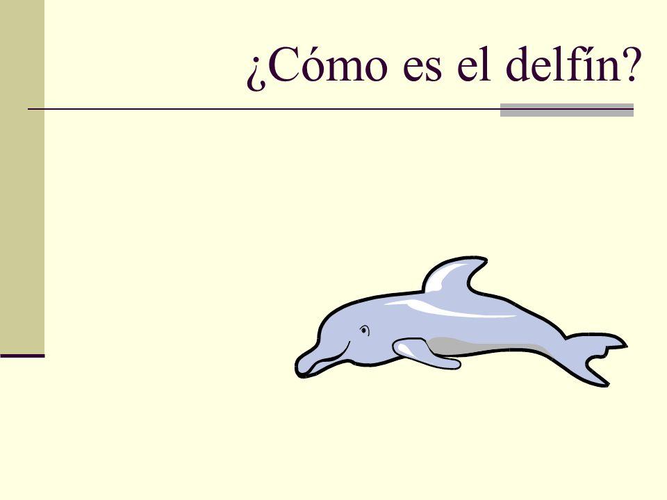 ¿Cómo es el delfín?