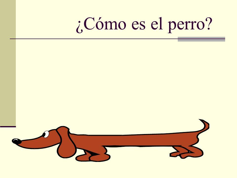 ¿Cómo es el perro?