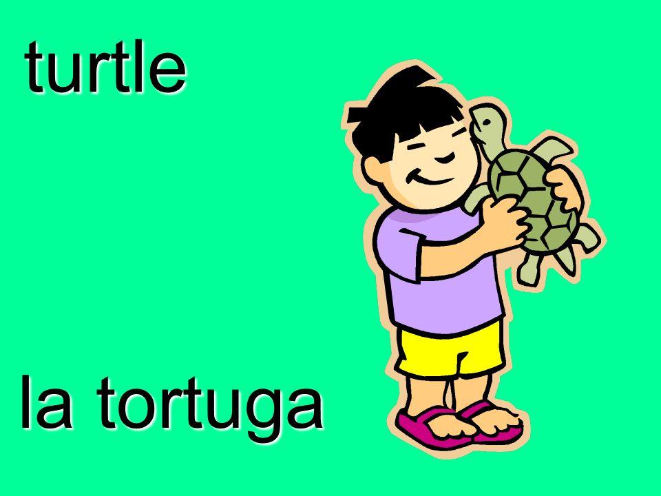 turtle la tortuga