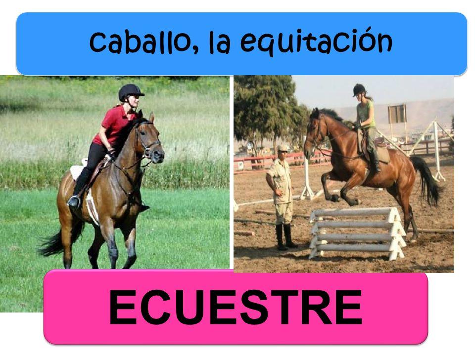 ECUESTRE caballo, la equitación