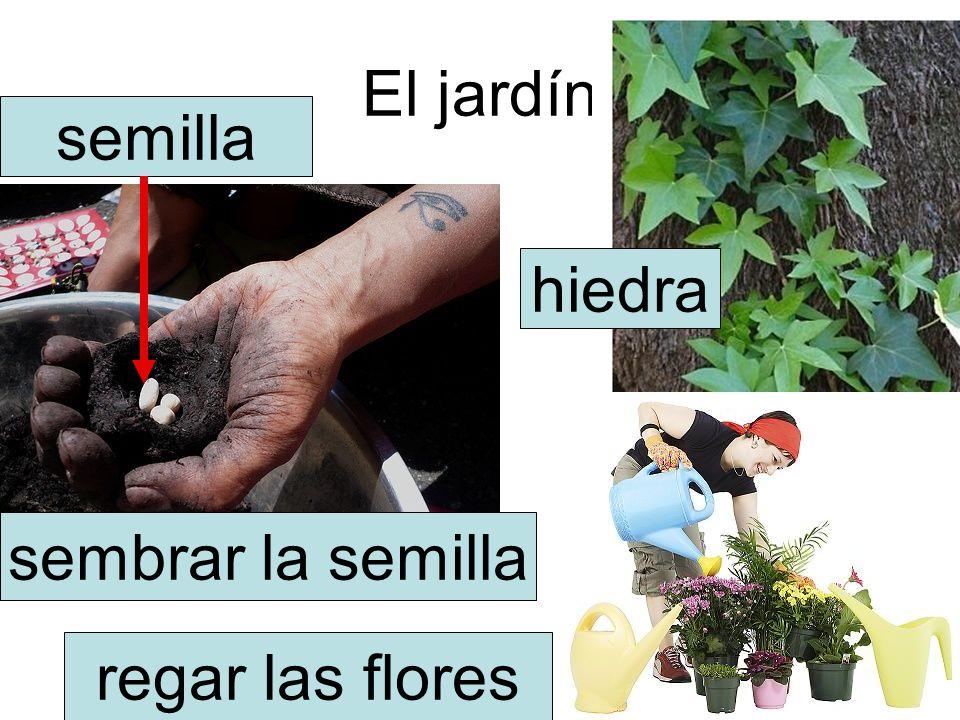 El jardín hiedra semilla sembrar la semilla regar las flores