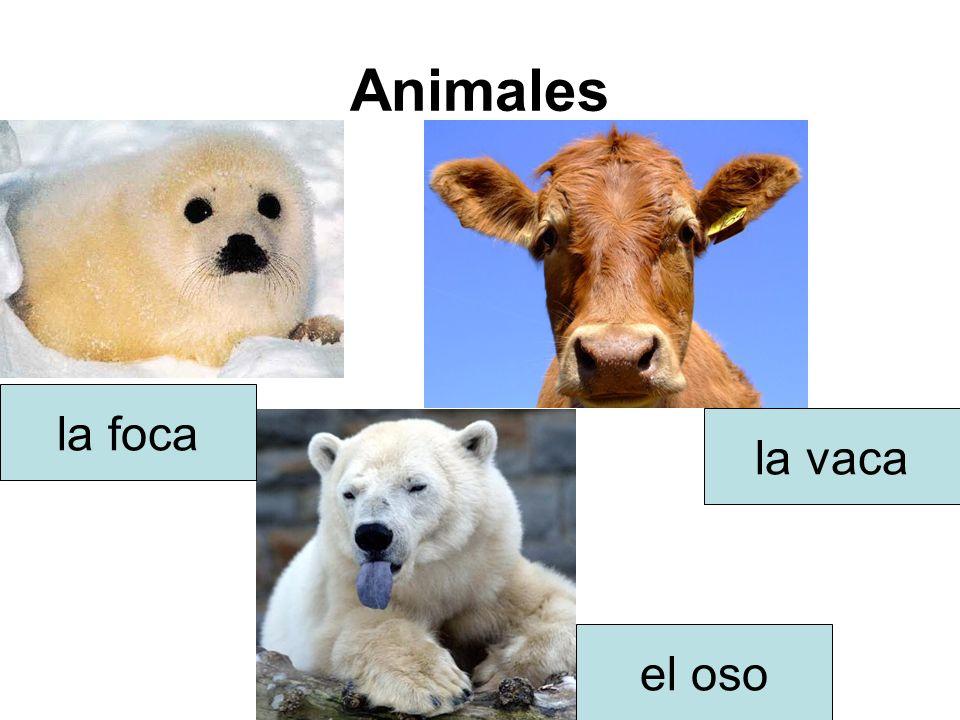 Animales la foca la vaca el oso