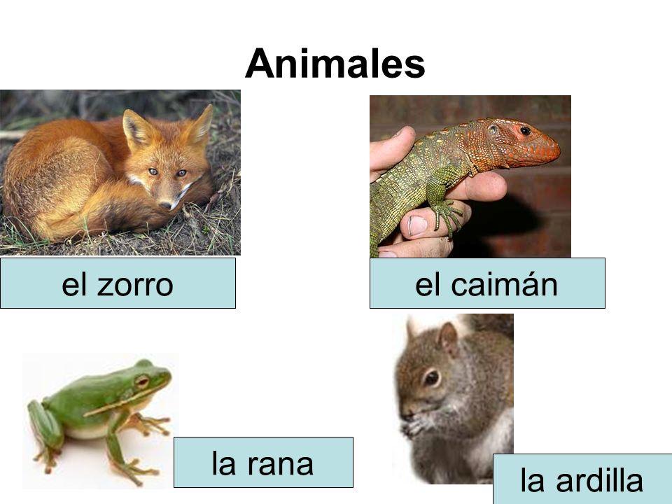 Animales el zorroel caimán la rana la ardilla