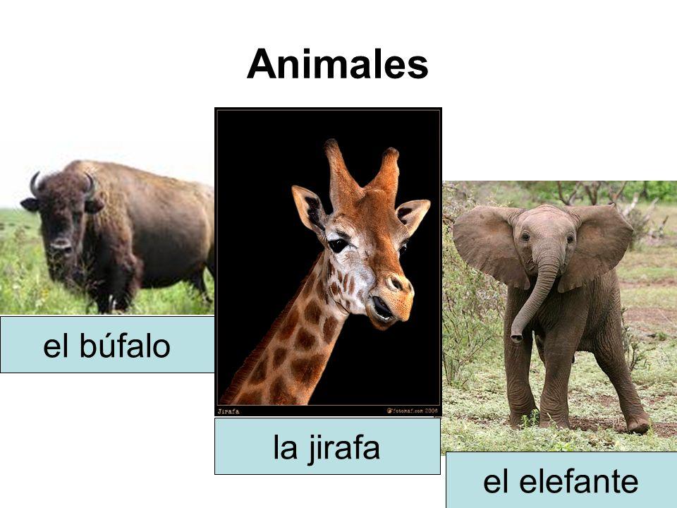 Animales el búfalo la jirafa el elefante
