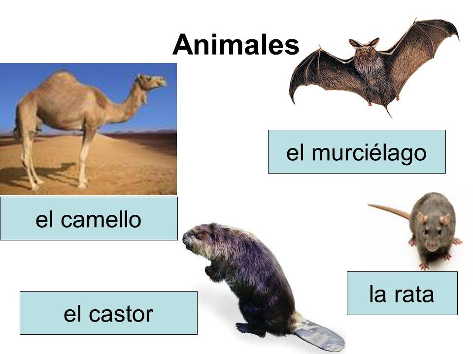 Animales el camello el murciélago el castor la rata