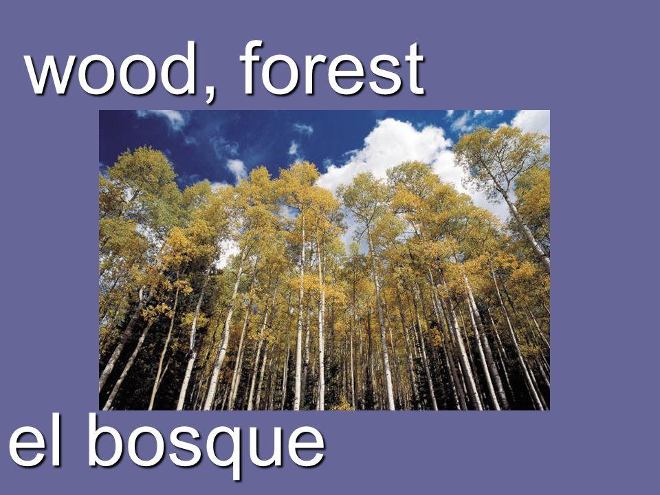 wood, forest el bosque