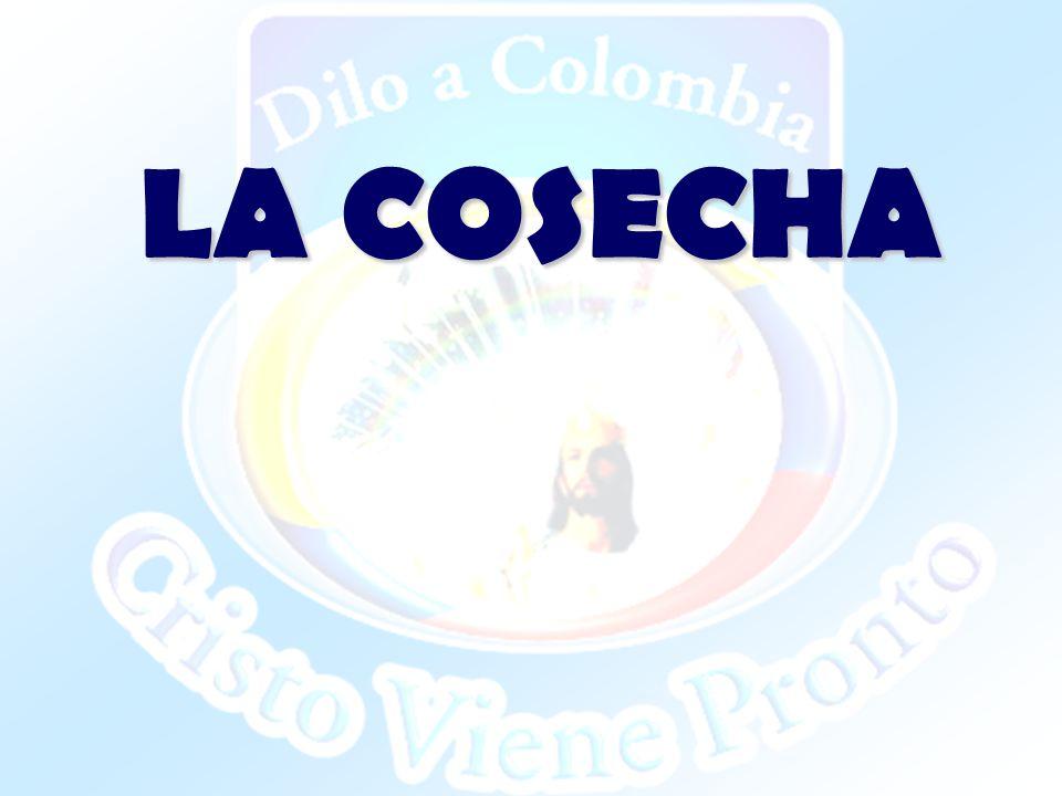 LA COSECHA