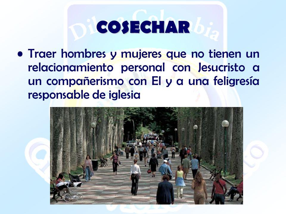 COSECHAR Traer hombres y mujeres que no tienen un relacionamiento personal con Jesucristo a un compañerismo con El y a una feligresía responsable de i