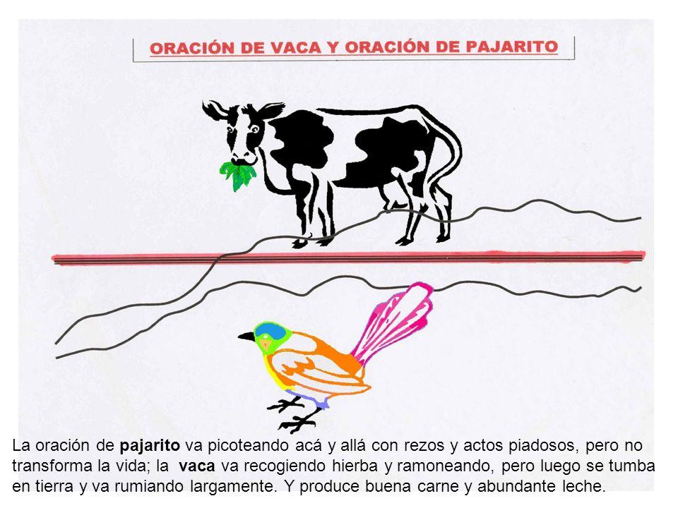 La oración de pajarito va picoteando acá y allá con rezos y actos piadosos, pero no transforma la vida; la vaca va recogiendo hierba y ramoneando, per