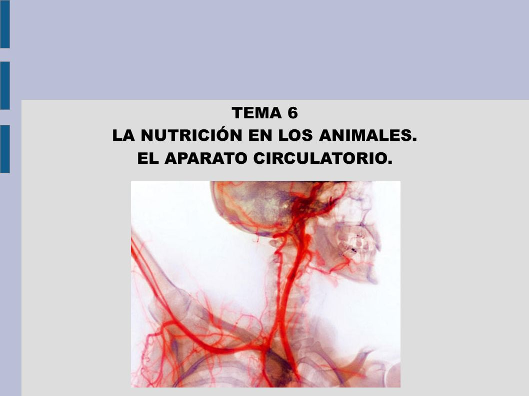 EL MEDIO INTERNO El medio interno es el líquido que transporta las sustancias nutritivas.