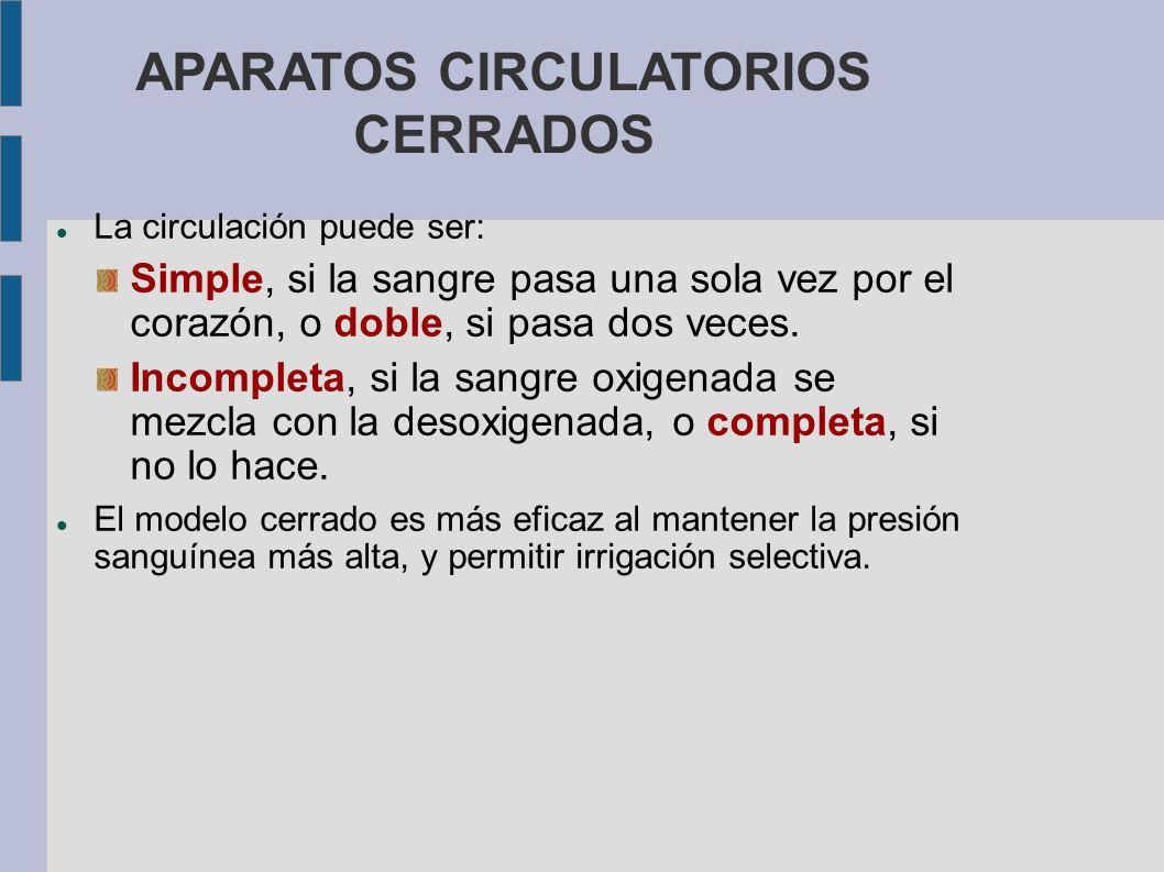 APARATOS CIRCULATORIOS CERRADOS La circulación puede ser: Simple, si la sangre pasa una sola vez por el corazón, o doble, si pasa dos veces. Incomplet