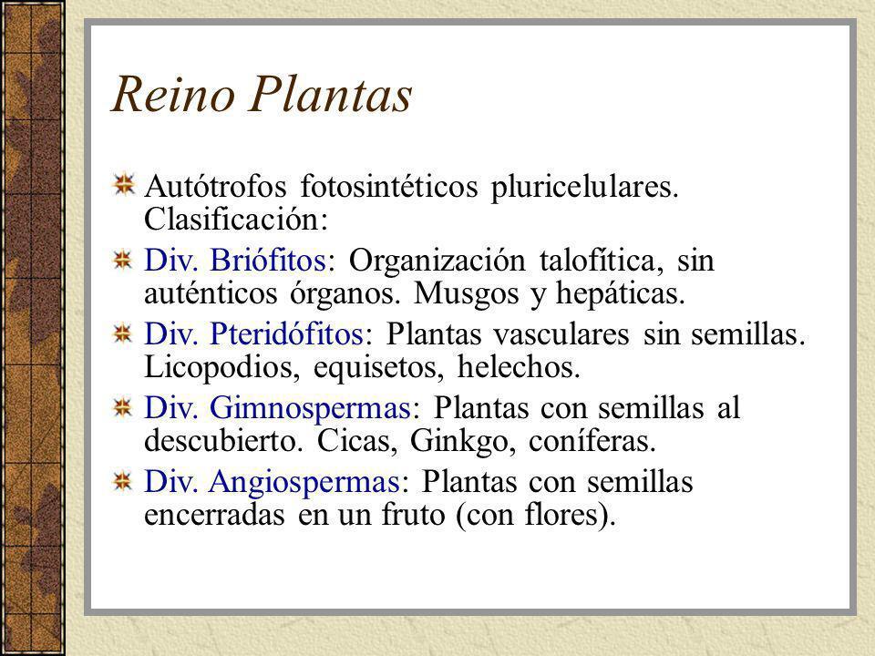 Reino Plantas Autótrofos fotosintéticos pluricelulares. Clasificación: Div. Briófitos: Organización talofítica, sin auténticos órganos. Musgos y hepát