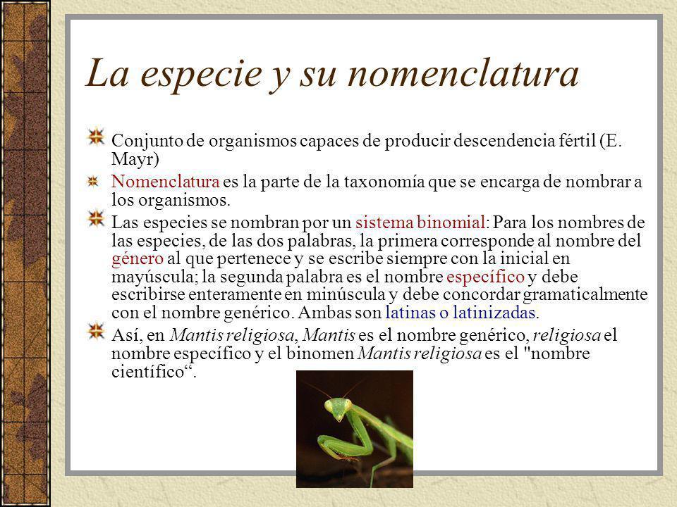 La especie y su nomenclatura Conjunto de organismos capaces de producir descendencia fértil (E. Mayr) Nomenclatura es la parte de la taxonomía que se